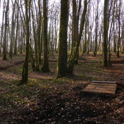 Au cœur des bois